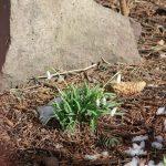 Poszukiwania wiosny z Marzanną